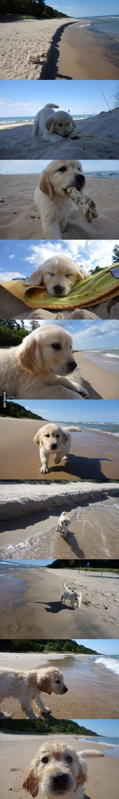 This puppy is enjoying his first trip to the beach!
