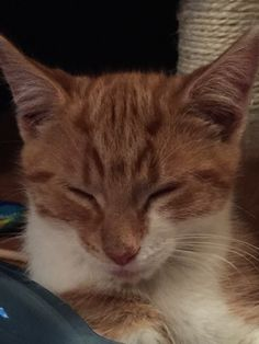 My new kitten has cat ears for eyebrows