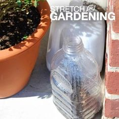 Start Spring Seedlings Outdoors with Winter Sowing   Garden Club