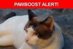 Please spread the word! Winky was last seen in New Port Richey, FL 34654.    Nearest Address: Near Lacey Dr & Randee Rd