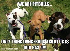 Pit Bull gasbombs