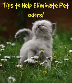 Tips to Help Eliminate Pet Odors! - http://rochesterrealestateblog.com/pet-odors-can-kill-home-sale/ via @kylehiscockRE @massrealty #realestate #pets #sellingahome