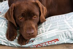 Screenprinted and eco-friendly dog bed from www.hund.co.za Dog Friends, Dog Bed, Screen Printing, Labrador Retriever, Eco Friendly, Pets, Animals, Beautiful, Screen Printing Press