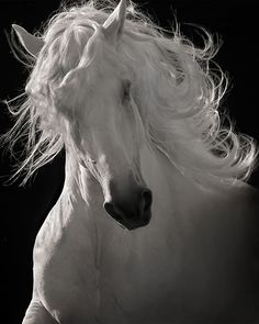 Roibert Dawson - The Lusitano Dancer.  To be loved by a horse, or by any animal, should fill us with awe -- for we have not deserved it. http://www.annabelchaffer.com/categories/Equestrian-Gifts/
