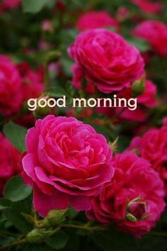 472 best Good Morning Gif photos by sonusunariya Good Morning Text Messages, Good Morning Sunday Images, Good Morning Images Flowers, Good Morning Roses, Good Morning Texts, Morning Morning, Good Morning Picture, Good Morning Good Night, Morning Pictures