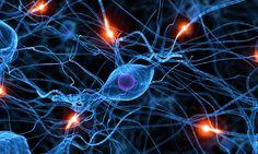Onderzoek: creatine houdt niet alleen je spieren in vorm maar ook je hersenen