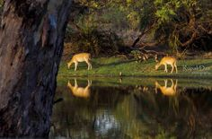 Oh Deer! Oh Deer, Nature, Photography, Animals, Fotografie, Animales, Photograph, Animaux, Naturaleza