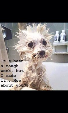 How Adorable! Funny ģd is what Tank looks like when he gets a bath! Animal Jokes, Funny Animal Memes, Cute Funny Animals, Funny Animal Pictures, Cute Baby Animals, Funny Memes, Haha Funny, Funny Cute, Hilarious