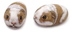 Guinea pig - acrylic on rock | Rock Painting Art by Roberto Rizzo