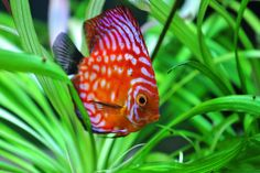 ... Aquariums on Pinterest Aquarium, Reef aquarium and The aquarium