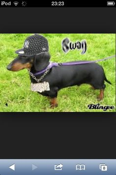 DOGS WITH SWAG >:D