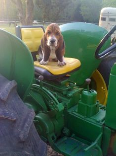 Two of my favorite things, a basset hound and a John Deere tractor!
