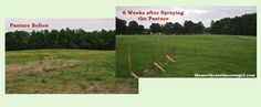 Before and After we started our Horse Pasture Care project http://www.thenorthcarolinacowgirl.com/farm-improvements/horse-pasture-tips/
