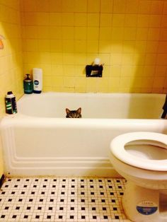 16ridiculous cats who are convinced they've found the perfect hiding place
