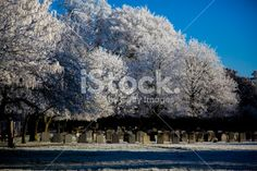 Frost in a graveyard Royalty Free Stock Photo