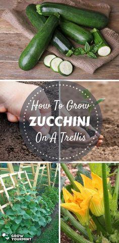How To Build Or Buy Trellis? #garden#gardening#organic#Zucchini