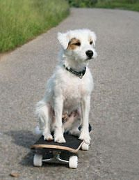 This dog knows how to skateboard!