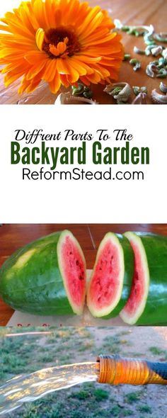I like gardening... But would you believe it if I told you that when I first started I thought I would hate it! :) Click through to learn about the important different parts of the backyard garden.