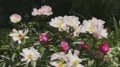 Video How to Create a Colorful Garden | bhg.com