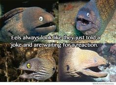 eels always look like they just told a joke and are waiting for a reaction! hahaha