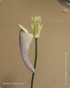 На глаза  мне попался необычный  цветок. Называется «Аквилегия», простонародное название  - «Водосбор». Форма интересная, расцветки  разнообразные. Сорвала цветочек, разобрала на «запчасти» соцветие, обвела на бумаге и получила шаблоны в натуральную величину. Собрала. Вот что получилось… фото 13