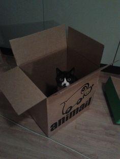 Skicka djur med post?