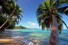 The Costa Rica Caribbean Coast has everything you're looking for on your holiday, whether rest and relaxation, romance, adventure, family time, fun with friends, or new beginnings like your wedding or honeymoon.