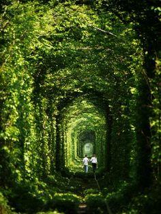 Tunnel of Love, Klevan, UkraineBeautiful yet surreal landscapes around the world