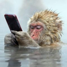 A monkey in a hot spring while he tweets his whereabouts....