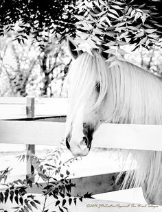 """Horse photography, """"The latest style"""" JDeCastro-AgainstTheWindImages-7220"""