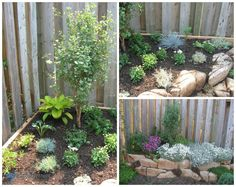 Low Maintenance Gardening (Part 2): Rock Garden