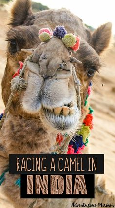 Have you ever raced a camel?Pushkar in India is the perfect place to ride or race a camel in the desert.