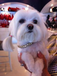 necklace dog:) from your friends at k9katelynn:)