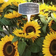 cool vancouver florist Happy Friday everyone :) Dont miss out on our Sunflower sale today ! #sale #sunflower #yaletown #vancouverflowershop #yaletownflorist #tgif #sunflowerflorist  #vancouverflorist #vancouverflorist #vancouverwedding #vancouverweddingdosanddonts