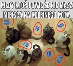 Dom bez kota to głupota Very Funny Memes, Haha Funny, Polish Memes, Best Memes Ever, Past Tens, Everything And Nothing, Cat 2, Save My Life, Reaction Pictures