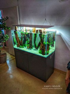 Water change, plant trimmed and setup new into the tank, done ✔️😊🍻🏁 . Aquarium Design, Diskus Aquarium, Aquarium Terrarium, Aquarium Stand, Tropical Fish Aquarium, Tropical Fish Tanks, Nature Aquarium, Planted Aquarium, Aquascaping
