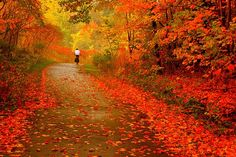 Canadian Fall Landscapes - Simply Stacie
