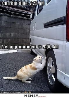 FREE Meow Mix Irresistibles Cat Treats