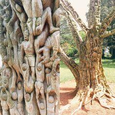 Artist Unkown. Sculpted tree from Aburi Botanical Gardens located in Aburi, Ghana