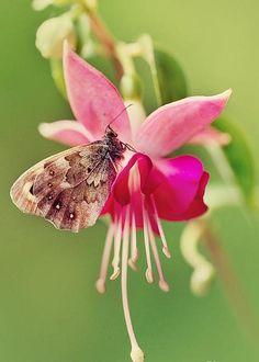 Buttterfly by Jaroslaw Blaminsky