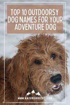 Naming a new pup? Plan to raise an outdoorsy dog who will hit the hiking trails with you? Check out these mountain lover dog names for the outdoorsy dog! We named our Labradoodle, Jasper after Jasper National Park. See the other names that were on our list! #hikingdogs #labradoodle #outdoordognames Hiking Dogs, Hiking Trails, Strong Dog Names, North Cascades National Park, Animal Care, Family Adventure, Labradoodle, Family Dogs, Pet Stuff