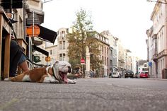 antwerp | city vibe with your cool dog
