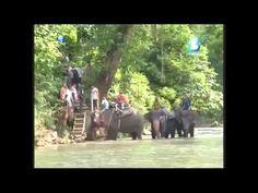 Tangkahan Wisata Alam Lengkap di Sumatera Utara - Sumatera Utara