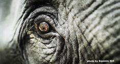 Our latest blog celebrating World Elephant Day.
