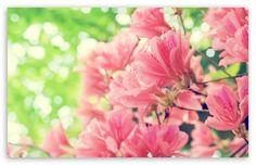 Beautiful Spring Flowers wallpaper