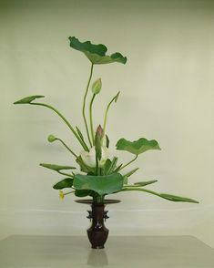 Green Ikebana⁠ [Image - via Arrangements Ikebana, Modern Floral Arrangements, Ikebana Flower Arrangement, Flower Arrangements, Japanese Plants, Japanese Flowers, Japanese Art, Arte Floral, Exotic Flowers