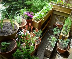 Container Gardening in the Mile High City! Welcome to  the Patio of Pots!