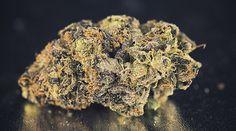 Cannabis gegen die GKV - Die Auseinandersetzung um Cannabis als Medizin geht in die 2. Runde Seit 10. März diesen Jahres müssen die Gesetzlichen Krankenkassen in Deutschland d... Cannabis, Herbs, Food, Hemp, Medicine, Circuit, Germany, Essen, Ganja