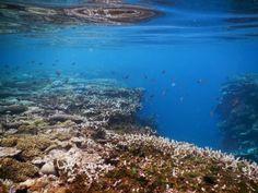 Thio - Récif corallien