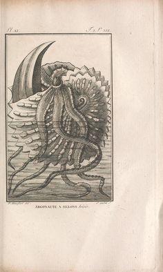 t.3 (1802) - Histoire naturelle, générale et particuliere des mollusques : - Biodiversity Heritage Library